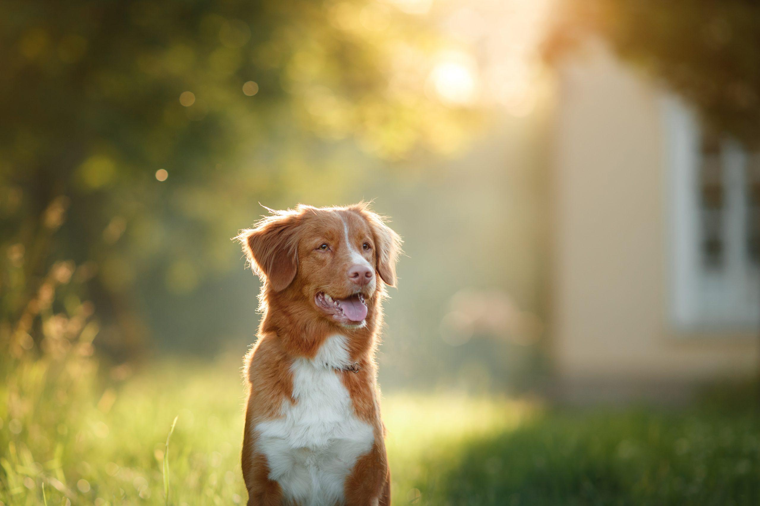 אימון כלב
