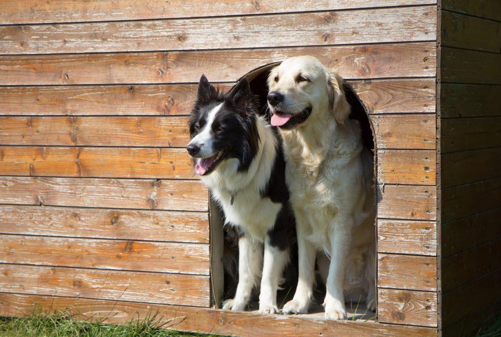 פנסיון לכלבים בצפון
