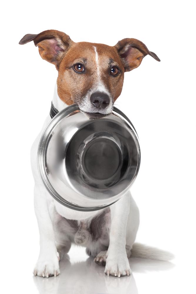 מזון לכלבים רגישים