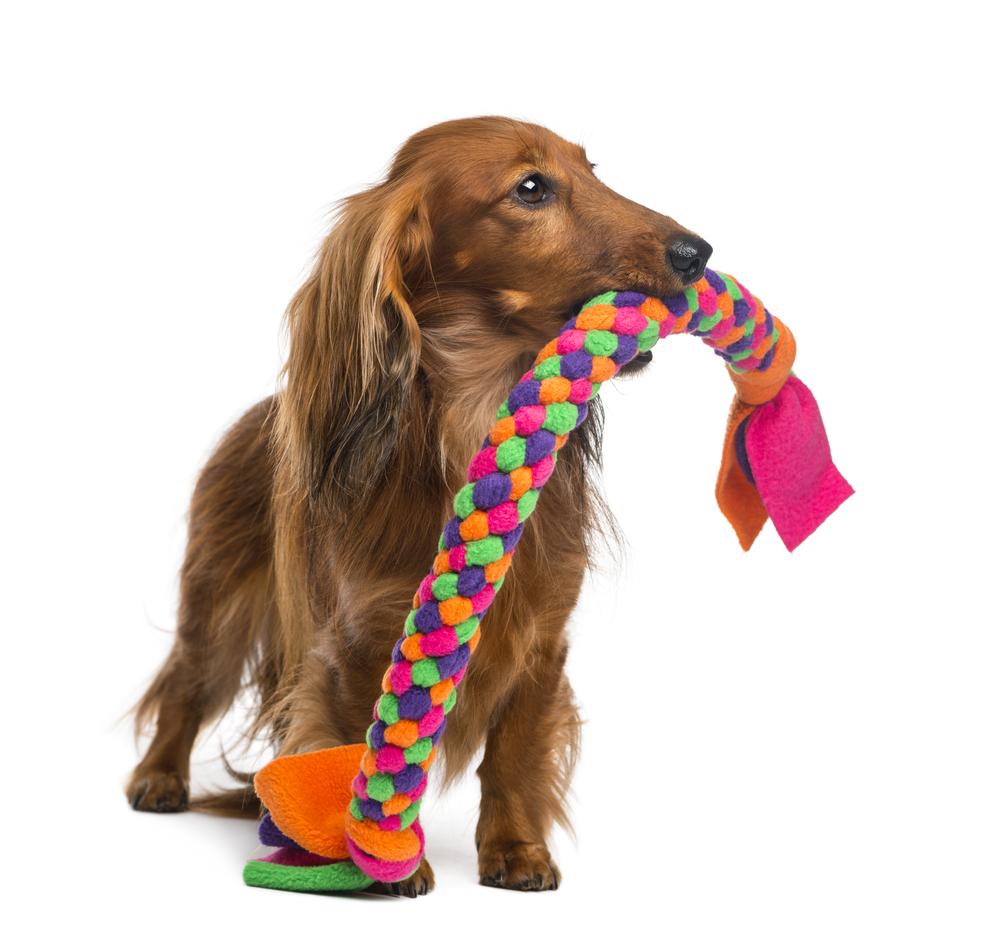 צעצועים לכלבים
